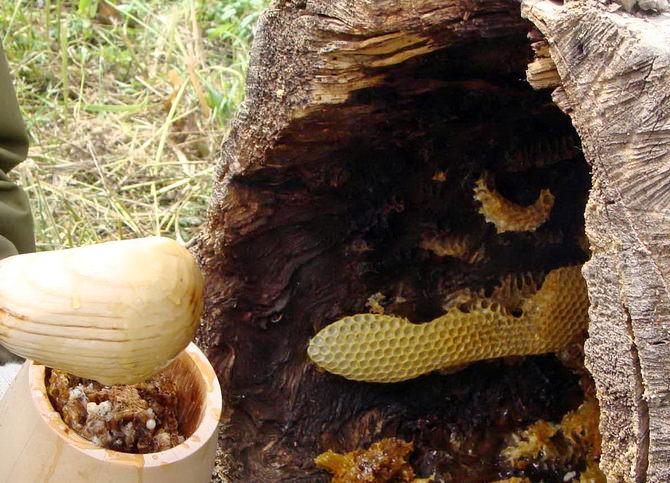 Как собирают бортевой мед