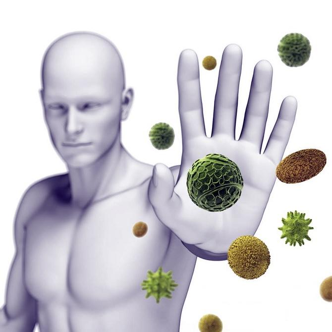 perga-dlya-immuniteta