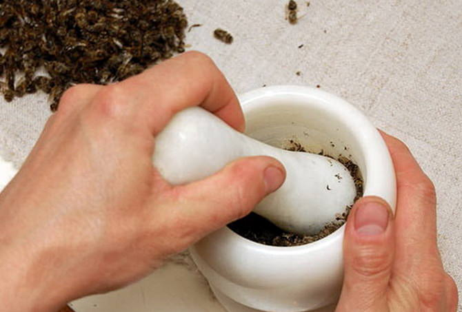 Пчелиный подмор для похудения: рецепты, как принимать