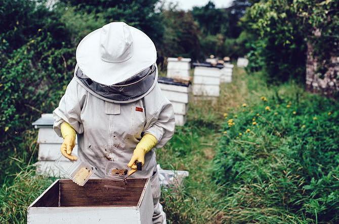 Хранение пчелиного воска
