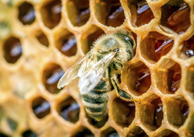 Как получают пчелиный воск