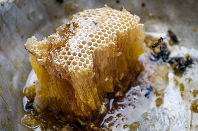 Дикий мед