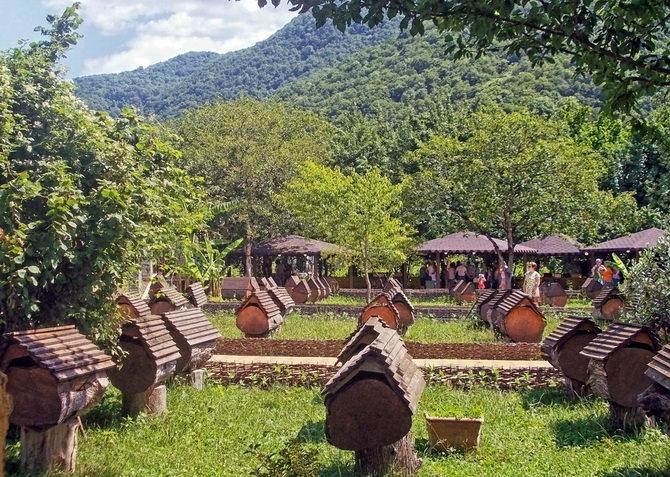 Пасека в Абхазии